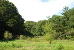 写真:矢並湿地1